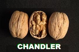 1chandler kuru
